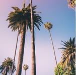 St Kilda Palms