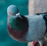 Moreland Bird